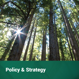Policy & Strategy